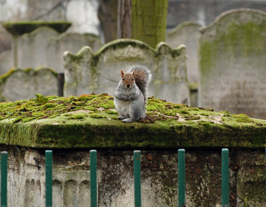 A squirrel on a tomb at Bunhill Fields