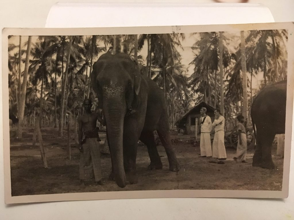 Navy men meeting elephants for the second time – circa 1928